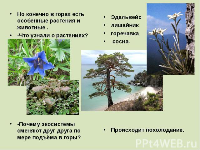 Но конечно в горах есть особенные растения и животные . -Что узнали о растениях? -Почему экосистемы сменяют друг друга по мере подъёма в горы? Эдельвейс лишайник горечавка сосна. Происходит похолодание.