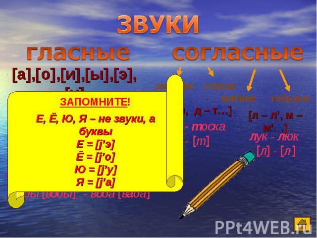 ЗВУКИ гласные согласные [а],[о],[и],[ы],[э],[у] ЗАПОМНИТЕ! Е, Ё, Ю, Я – не звуки, а буквы Е = [j'э] Ё = [j'о] Ю = [j'у] Я = [j'а]