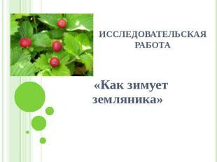 Исследовательская работа «Как зимует земляника»