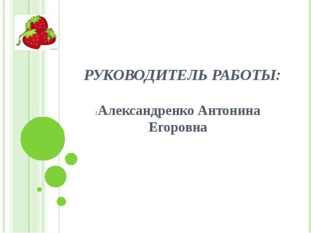 Руководитель работы: :Александренко Антонина Егоровна