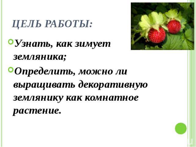 Цель работы: Узнать, как зимует земляника; Определить, можно ли выращивать декоративную землянику как комнатное растение.
