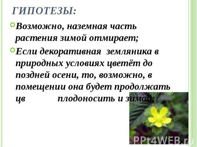Гипотезы: Возможно, наземная часть растения зимой отмирает; Если декоративная земляника в природных условиях цветёт до поздней осени, то, возможно, в помещении она будет продолжать цвести и плодоносить и зимой;
