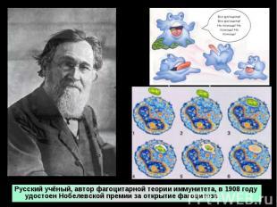 Русский учёный, автор фагоцитарной теории иммунитета, в 1908 году удостоен Нобел