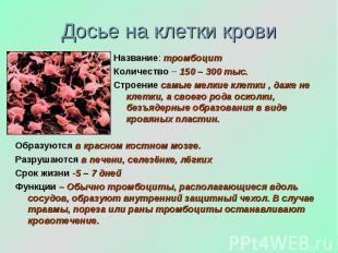 Досье на клетки крови Название: тромбоцит Количество – 150 – 300 тыс. Строение с