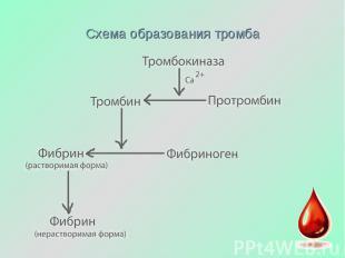 Схема образования тромба