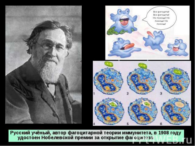 Русский учёный, автор фагоцитарной теории иммунитета, в 1908 году удостоен Нобелевской премии за открытие фагоцитоза