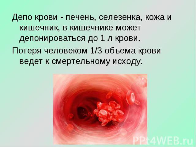 Депо крови - печень, селезенка, кожа и кишечник, в кишечнике может депонироваться до 1 л крови. Потеря человеком 1/3 объема крови ведет к смертельному исходу.