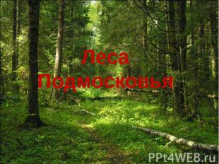 Леса Подмосковья