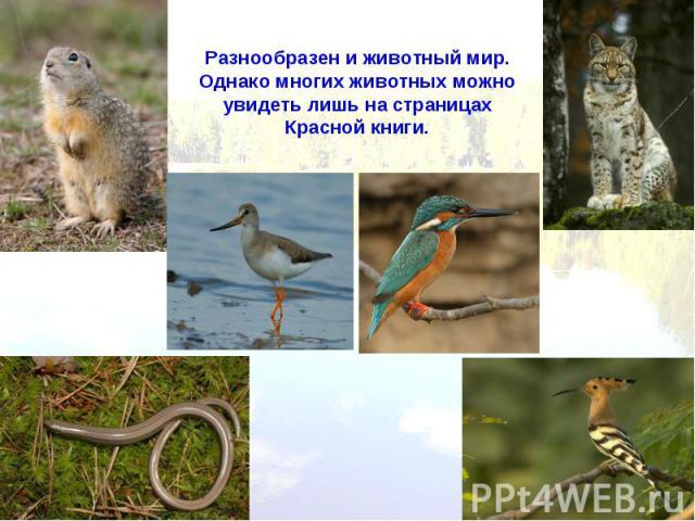Разнообразен и животный мир. Однако многих животных можно увидеть лишь на страницах Красной книги.