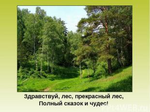 Здравствуй, лес, прекрасный лес, Полный сказок и чудес!