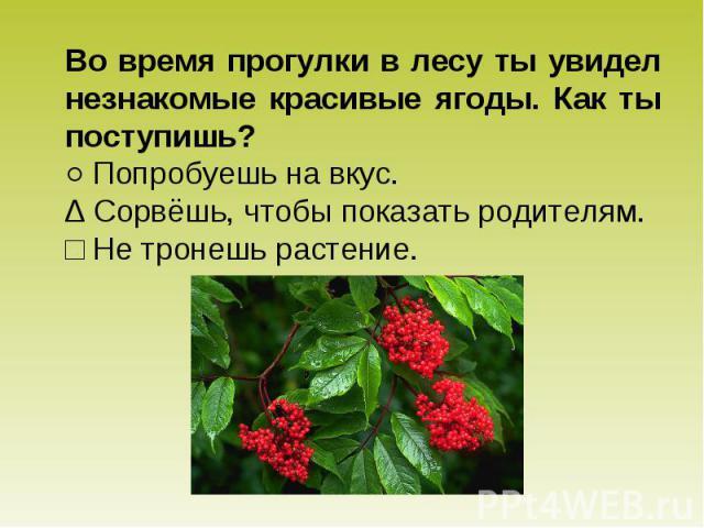 Во время прогулки в лесу ты увидел незнакомые красивые ягоды. Как ты поступишь? ○ Попробуешь на вкус. ∆ Сорвёшь, чтобы показать родителям. □ Не тронешь растение.