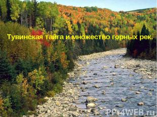 Тувинская тайга и множество горных рек.