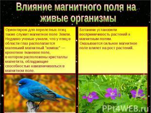 Влияние магнитного поля на живые организмы Ориентиром для перелетных птиц также