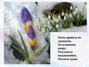 Весна пришла по снежному, По влажному ковру, Рассыпала подснежники, Посеяла трав