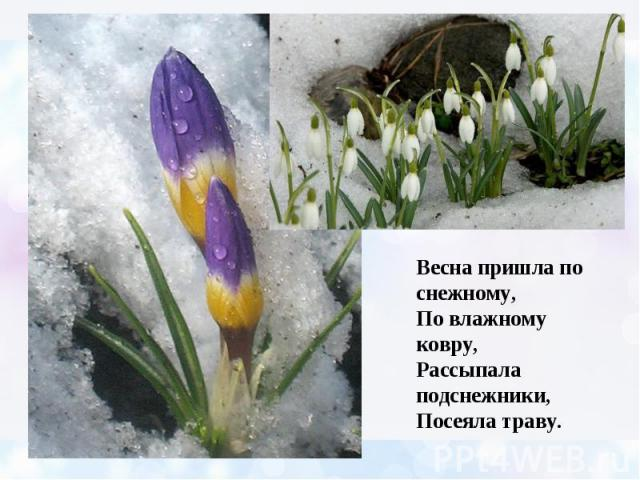 Весна пришла по снежному, По влажному ковру, Рассыпала подснежники, Посеяла траву.