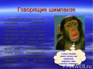 Говорящие шимпанзе Ближайший родственник человека – шимпанзе научился общаться с