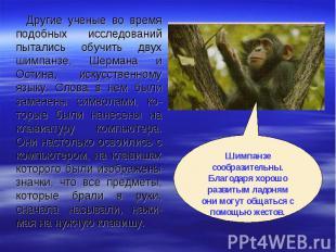 Другие ученые во время подобных исследований пытались обучить двух шимпанзе, Шер