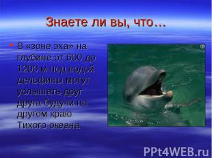 Знаете ли вы, что… В «зоне эха» на глубине от 600 до 1200 м под водой дельфины м