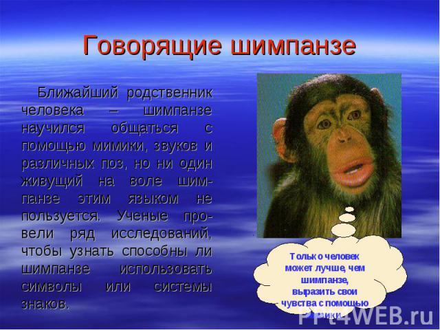Говорящие шимпанзе Ближайший родственник человека – шимпанзе научился общаться с помощью мимики, звуков и различных поз, но ни один живущий на воле шим-панзе этим языком не пользуется. Ученые про-вели ряд исследований, чтобы узнать способны ли шимпа…