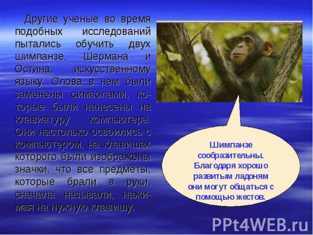 Другие ученые во время подобных исследований пытались обучить двух шимпанзе, Шермана и Остина, искусственному языку. Слова в нем были заменены символами, ко-торые были нанесены на клавиатуру компьютера. Они настолько освоились с компьютером, на клав…