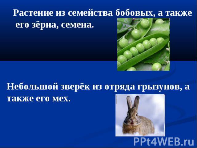 Растение из семейства бобовых, а также его зёрна, семена. Небольшой зверёк из отряда грызунов, а также его мех.