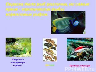 Окраска тела рыб различна, но самые яркие - тропические рыбы коралловых рифов. Ч