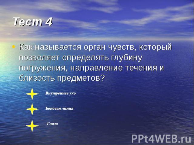 Тест 4 Как называется орган чувств, который позволяет определять глубину погружения, направление течения и близость предметов?