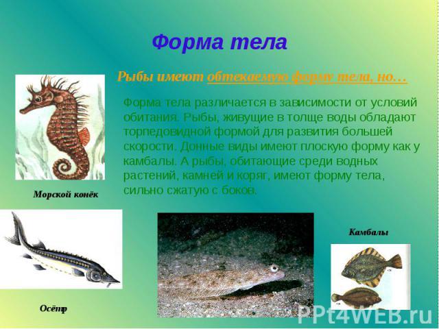 Форма тела Форма тела различается в зависимости от условий обитания. Рыбы, живущие в толще воды обладают торпедовидной формой для развития большей скорости. Донные виды имеют плоскую форму как у камбалы. А рыбы, обитающие среди водных растений, камн…