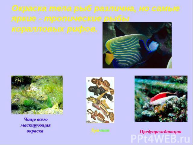 Окраска тела рыб различна, но самые яркие - тропические рыбы коралловых рифов. Чаще всего маскирующая окраска Предупреждающая
