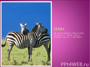 zebra My favorite animal`s a zebra It`s black and white . It`s strong . It lives