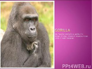 GORILLA My favorite animal`s a gorilla. It`s brown. It`s big. .It lives in Ameri
