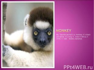 monkey My favorite animal`s a monkey. It`s black and white. It`s long. It lives