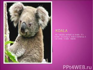 Koala My favorite animal`s a koala . It`s brown. It`s long. It lives in America.