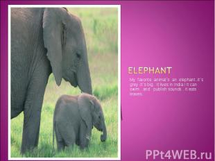Elephant My favorite animal`s an elephant .It`s grey .It`s big. It lives in Indi
