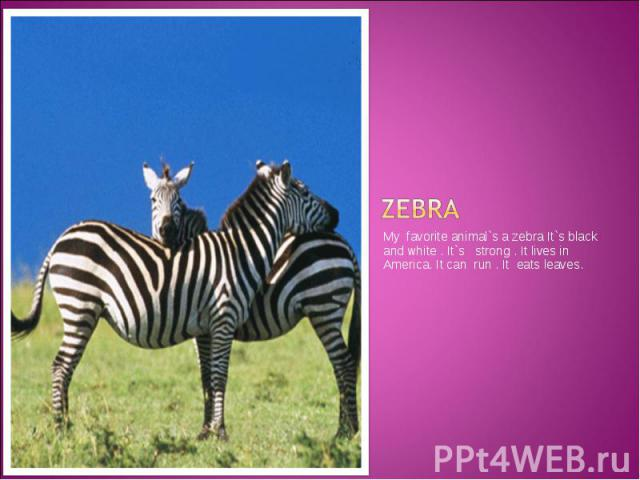 zebra My favorite animal`s a zebra It`s black and white . It`s strong . It lives in America. It can run . It eats leaves.