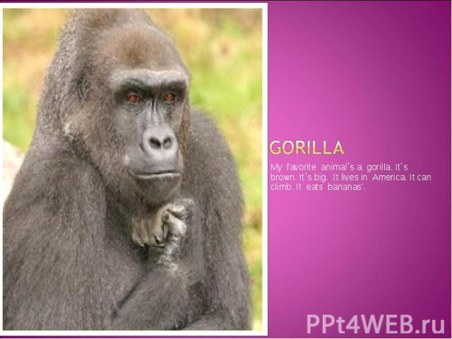 GORILLA My favorite animal`s a gorilla. It`s brown. It`s big. .It lives in America. It can climb. It eats bananas'.