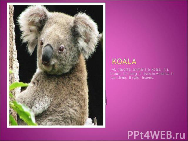 Koala My favorite animal`s a koala . It`s brown. It`s long. It lives in America. It can climb. It eats leaves.