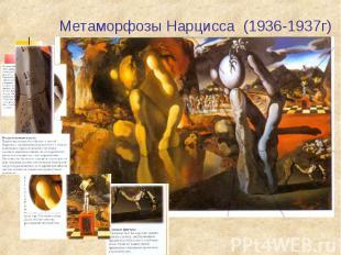 Метаморфозы Нарцисса (1936-1937г)