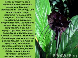1 место: Орхидеи - самые многочисленные в мире. Более 25 тысяч видов, большинств