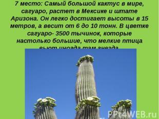 7 место: Самый большой кактус в мире, сагуаро, растет в Мексике и штате Аризона.
