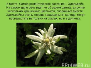 5 место: Самое романтическое растение – Эдельвейс. На самом деле речь идет не об