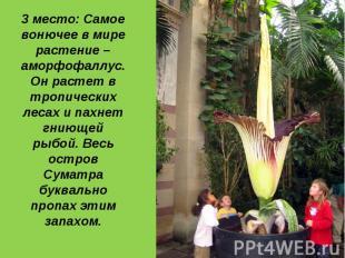 3 место: Самое вонючее в мире растение – аморфофаллус. Он растет в тропических л