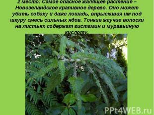 2 место: Самое опасное жалящее растение – Новозеландское крапивное дерево. Оно м