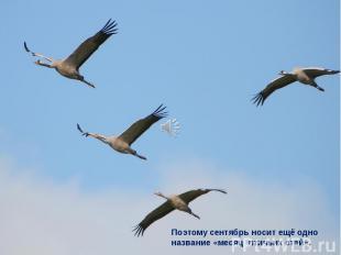 Поэтому сентябрь носит ещё одно название «месяц птичьих стай».