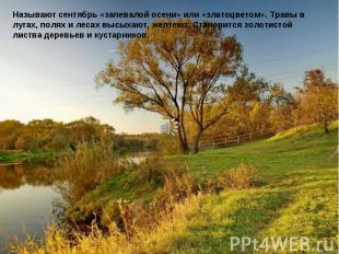 Называют сентябрь «запевалой осени» или «златоцветом». Травы в лугах, полях и ле
