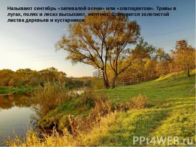 Называют сентябрь «запевалой осени» или «златоцветом». Травы в лугах, полях и лесах высыхают, желтеют. Становится золотистой листва деревьев и кустарников.