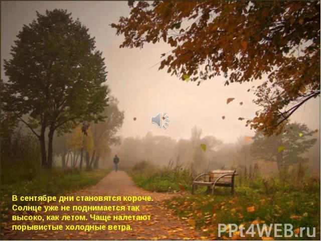 В сентябре дни становятся короче. Солнце уже не поднимается так высоко, как летом. Чаще налетают порывистые холодные ветра.