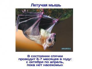 Летучая мышь В состоянии спячки проводит 6-7 месяцев в году: с октября по апрель