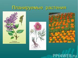 Планируемые растения