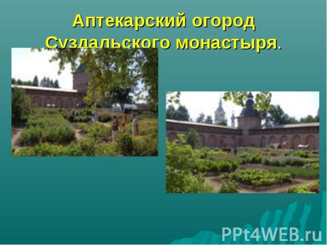 Аптекарский огород Суздальского монастыря.